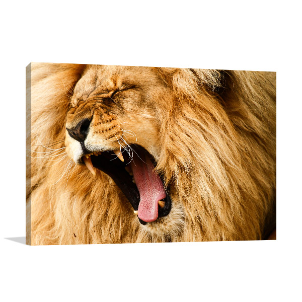 Yawning Lion Artwork Picture