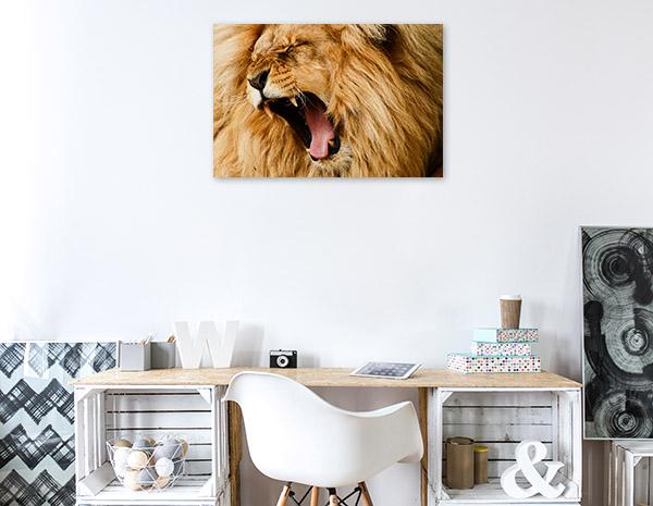 Yawning Lion Photo Artwork