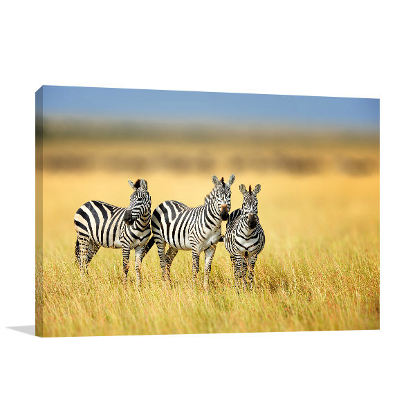 Zebras in Savannah Print Photo