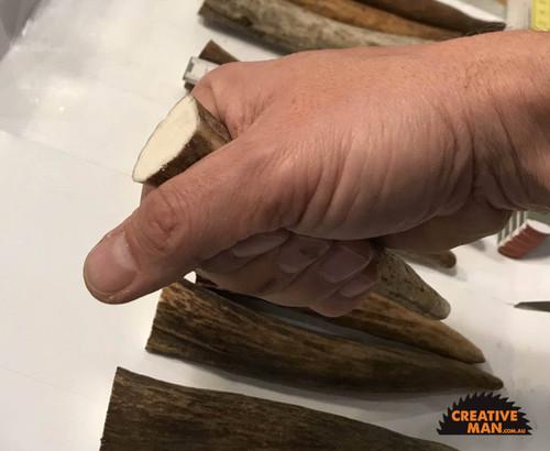 Moose Antler Tine 15 cm