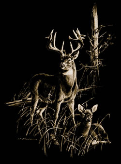 whitetail-buck-doe-scene.jpg