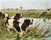 Art Prints of Springer Spaniels by Arthur Wardle