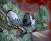 Art Prints of Crows by Bruno Liljefors