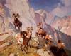 Art Prints of Bighorn Sheep No. 2 by Carl Rungius
