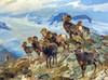 Art Prints of Big Horn Rams by Carl Rungius