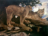 Art Prints of Canadian Lynx by Carl Rungius
