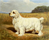 Art Prints of Royaline White Foam, Clumber Spaniel by Edwin Megargee