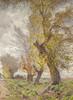 Art Prints of Cottonwood Trees by Gunnar Widforss