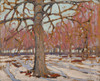 Art Prints of First Snow by Tom Thomson