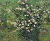 Art Prints of Roses by Vincent Van Gogh