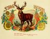 Art Prints of Stag Horn Cigars, Vintage Cigar Label