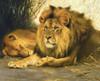 Art Prints of Resting Lions by Wilhelm Kuhnert