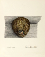 Art Prints of Cliff Swallow Nest, Plate XLI, American Bird Nests