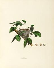 Art Prints of Summer Warbler Nest, Plate XV, American Bird Nests