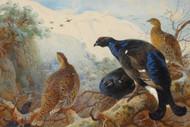 Art Prints of Blackgame by Archibald Thorburn