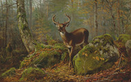 Art Prints of Buck in the Forest by Arthur Fitzwilliam Tait