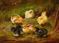 Art Prints of Chicks by Arthur Fitzwilliam Tait