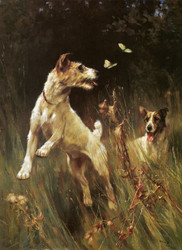 Art Prints of Chasing Butterflies, Wire-haired Fox Terriers by Arthur Wardle