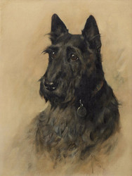 Art Prints of Portrait of Scottish Terrier Mac by Arthur Wardle