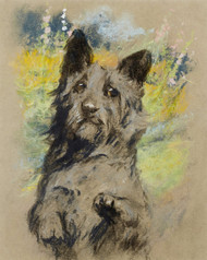 Art Prints of Scottish Terrier by Arthur Wardle