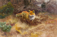 Art Prints of Fox and Landscape, 1915 by Bruno Liljefors