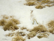 Art Prints of The Snow Hare by Bruno Liljefors