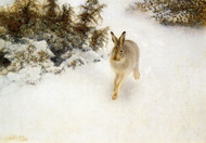 Art Prints of Winter Hare by Bruno Liljefors