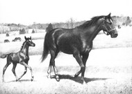 Art Prints of Mare Leading Her Colt by C.W. Anderson