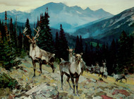 Art Prints of Mountain Caribou by Carl Rungius