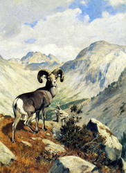 Art Prints of Mountain Sheep in Banff, Alberta, Canada by Carl Rungius