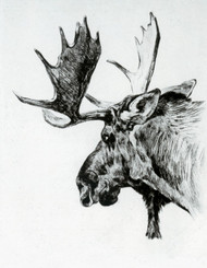 Art Prints of Young Bull by Carl Rungius
