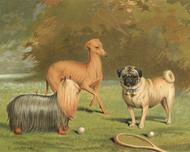 Art Prints of Yorkshire Pug and Italian Greyhound by Vero Shaw