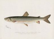 Art Prints of Adirondack Frost Fish by Sherman Foote Denton