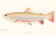 Art Prints of Albino Brook Trout by Sherman Foote Denton