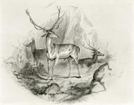 Art Prints of In the Glen by Edwin Henry Landseer
