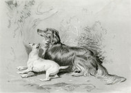 Art Prints of Safe by Edwin Henry Landseer