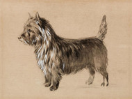 Art Prints of Portrait of a Cairn Terrier of Tapscott Kennel by Edwin Megargee