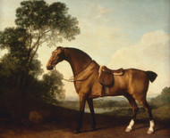 Art Prints of A Saddled Bay Hunter by George Stubbs