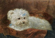 Art Prints of A Maltese by Henriette Ronner Knip