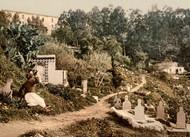 Art Prints of The Cemetery, Algiers, Algeria (387069)