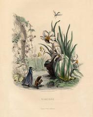 Art Prints of Daffodil, Narcissus by J. J. Grandville