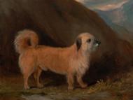 Dandie Dinmont Terrier by John Ferneley
