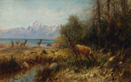 Art Prints of Elk on Jackson Lake, Wyoming by John Fery