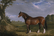 A Clydesdale Stallion by John Frederick Herring