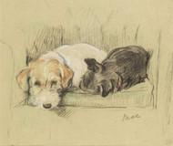 A Cozy Place by Lucy Dawson