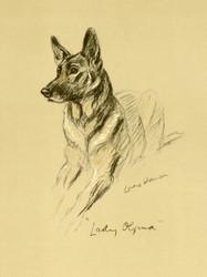 Art Prints of Alsatian Lady Olfina, German Shepherd by Lucy Dawson