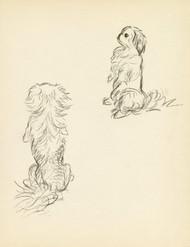 Art Prints of Pekingese 3 by Lucy Dawson