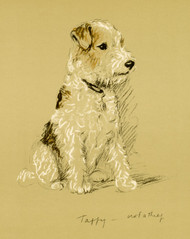 Art Prints of Taffy by Lucy Dawson