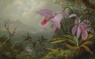 Art Prints of Two Sun Angel Hummingbirds on a Branch by Martin Johnson Heade