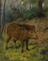 Art Prints of A Boar by Rosa Bonheur